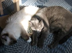 Cat_sunspot